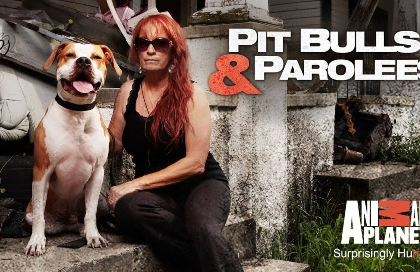 Dog-Show-Pit-Bulls-Parolees